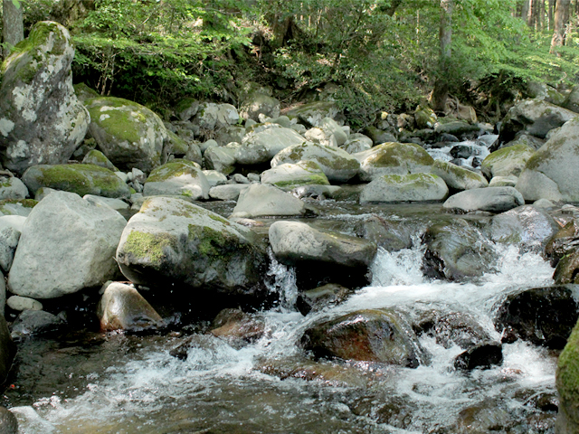 峯自然園のみどころ/隣接する久野川の渓谷