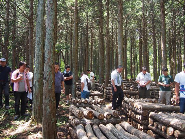 原木しいたけ栽培場