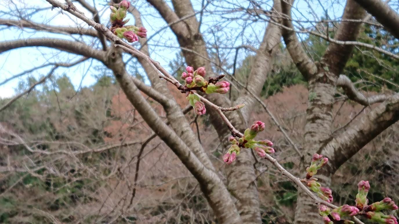 3/22現在の開花状況です!(^O^)
